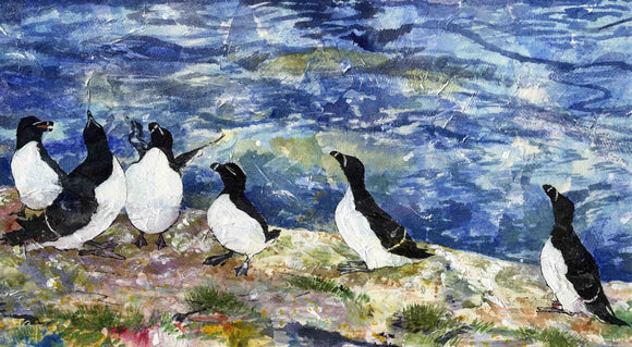 Waiting for mum, Razorbills at Swona