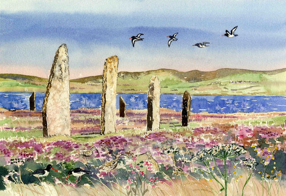 Oystercatchers and curlews at The Ring of Brodgar, Orkney