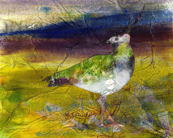 Lapwing  on the moor, Orkney