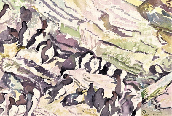 Guillemots hiding in the cliff at Marwick head, Orkney