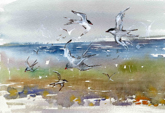Sketching Terns