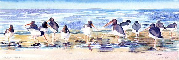 Oystercatchers on the shoreline