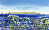 Cow parsley and Copinsay, Orkney