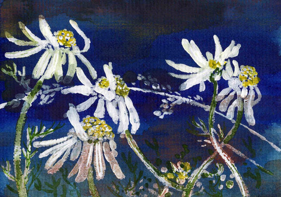 Bright white daisies against a blue sky