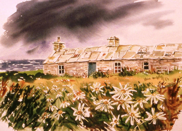 Cards - Ox-eye Daisies, Westray