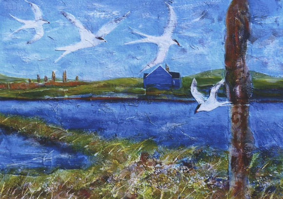 Blue house with terns, Stenness, Orkney