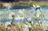 Wild daisies by the shoreline
