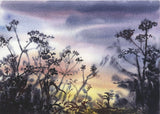 Cow parsley sunset