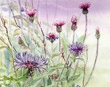 Cornflowers and Thistles
