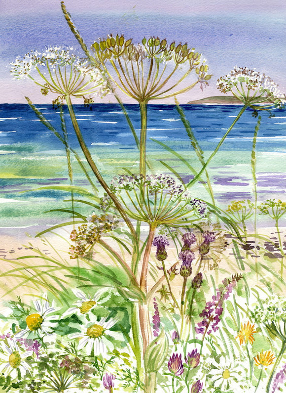 Cow parsley on the shoreline