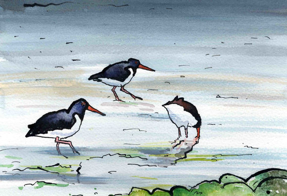 Busy Oystercatchers