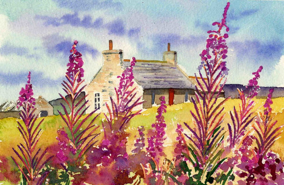 Rosebay willowherb and cottage, Orkney
