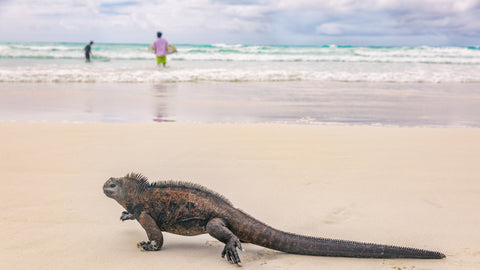 Surfing the Galapagos Islands