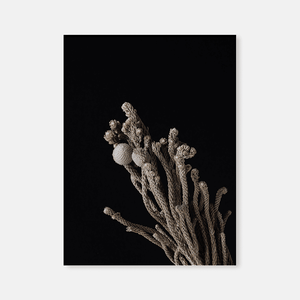 Dried flowers : Four