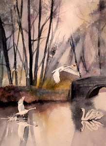 Original Watercolour Painting of Swans in Marlay Park, Rathfarnham, Dublin, Ireland, by Irish Artist Cathal O'Briain. Free P&P with Padded Protection within Ireland.