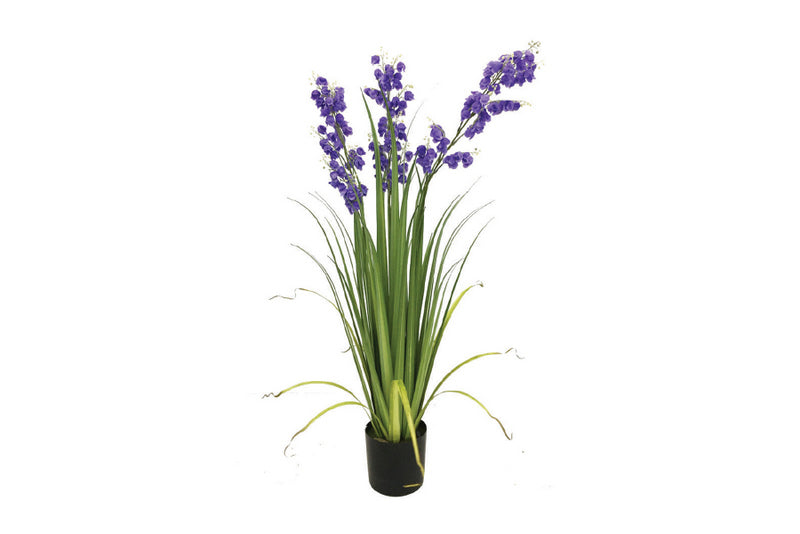 Potted Bluebell