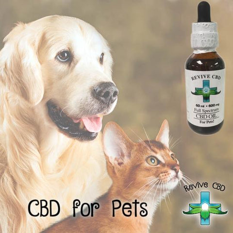 CBD for Dogs and Cats at Revive CBD in Littleton, CO 80127.
