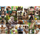 Funbox Dogs, Dogs, Dogs 1000 Piece Jigsaw Puzzle - Get Puzzled