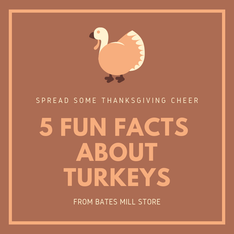 5 Fun Facts about Turkeys from Bates Mill Store