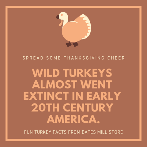 WILD TURKEYS ALMOST WENT EXTINCT IN EARLY 20TH CENTURY AMERICA.