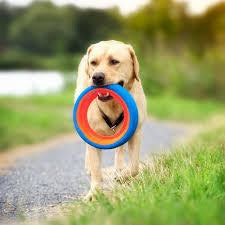 Chuckit! | Fetch Wheel Dog Toy