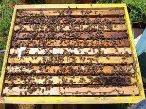 Honey Hive Production - Melicimo