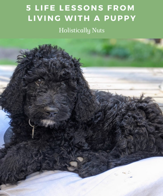 5 Life Lessons From Living With A Puppy