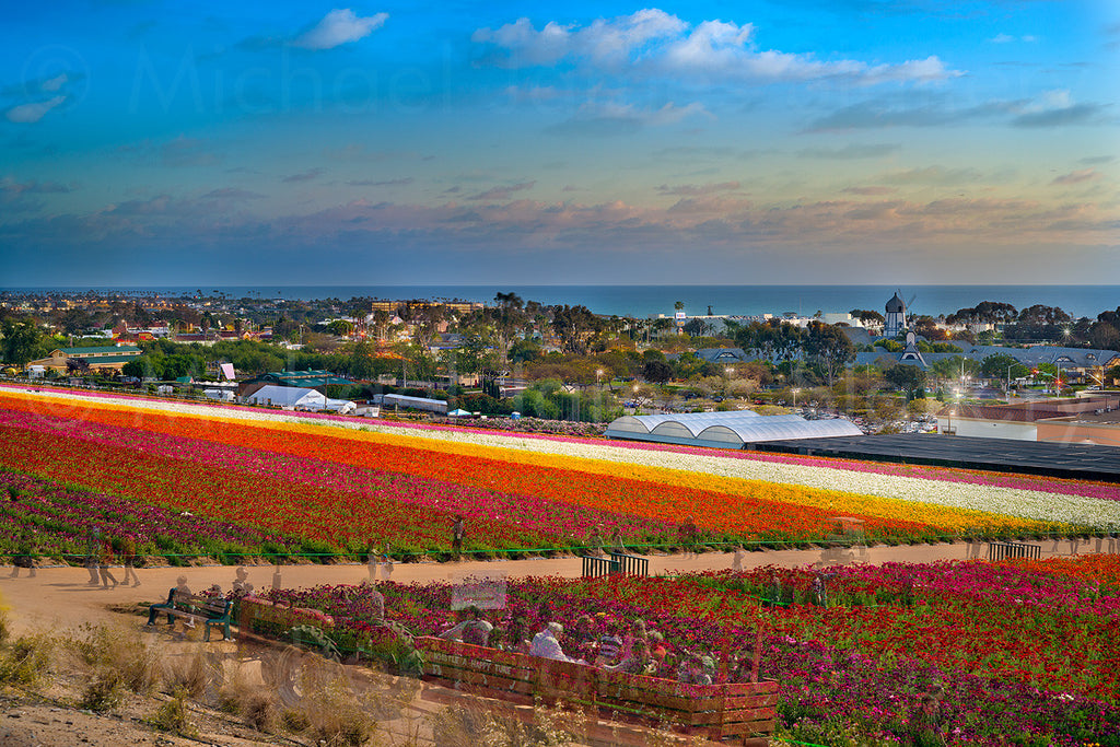 flower fields in carlsbad