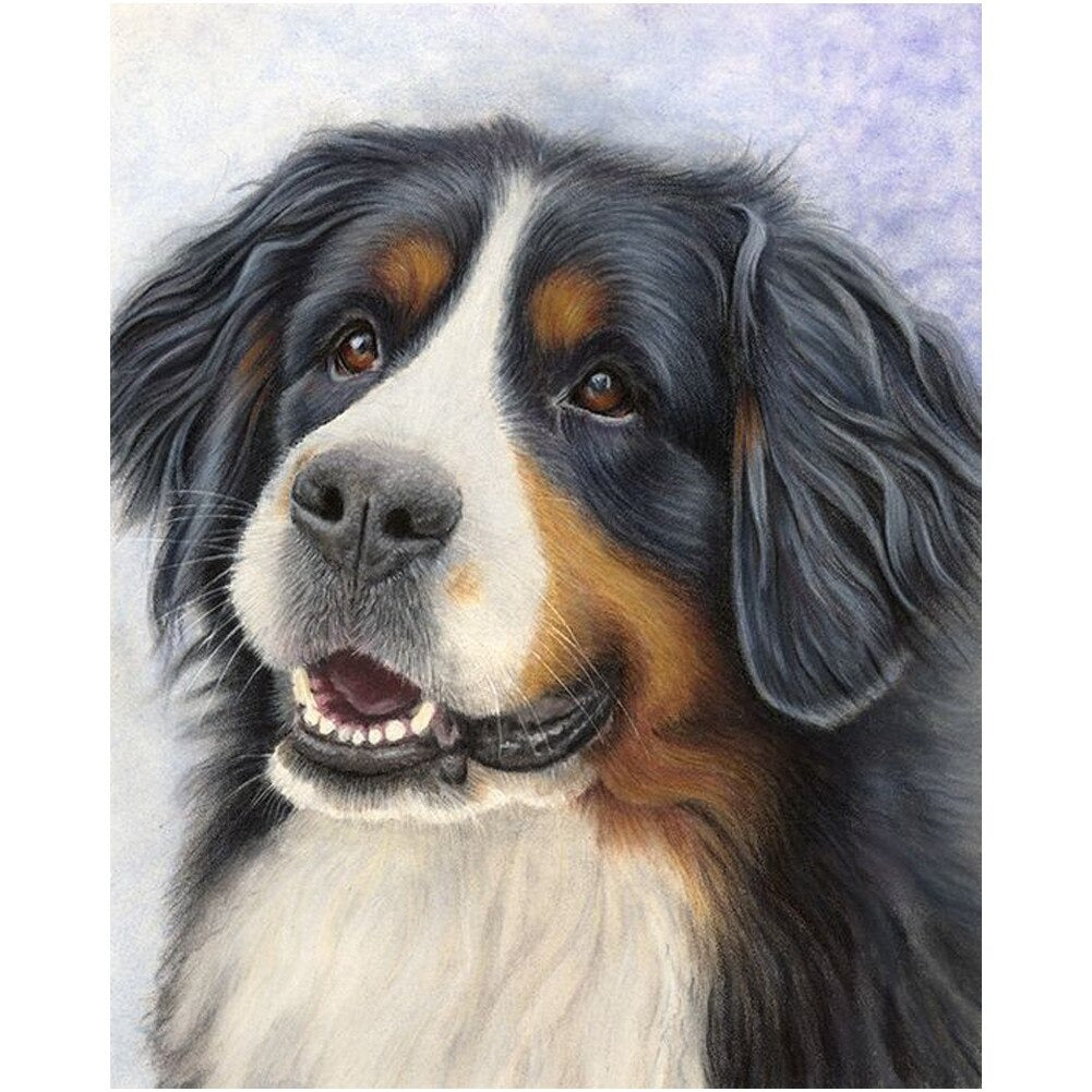 Diamond Painting Berner Sennen Hond