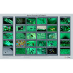 Micro-Features of Emerald wall chart, featuring rows of emerald microphotgraphs with captions