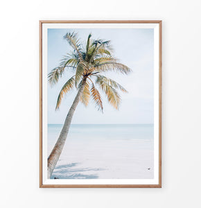 Palm tree in beach sand photo print