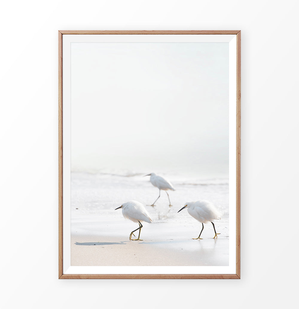 Seagulls on the beach photography