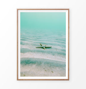 Nautical Wall Decor - Starfish in the green sea