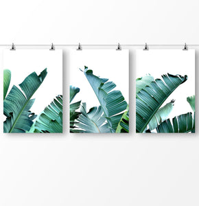 Banana leaf prints, Set of 3 Banana Wall Art, Green Banana Leaf
