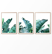 Load image into Gallery viewer, Banana Green Palm Leaf Wall Art Set of 3 Prints