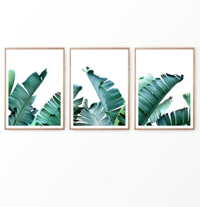 Banana Green Palm Leaf Wall Art Set of 3 Prints