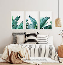 Load image into Gallery viewer, Three framed photo prints with banana leaves