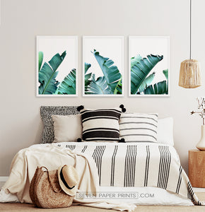 Three framed photo prints with banana leaves