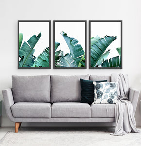 Three framed photo prints with banana leaves 3