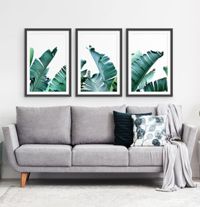 Three framed photo prints with banana leaves 2