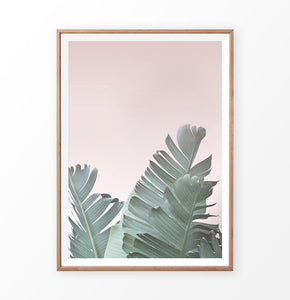 Banana Leaf on the Pink Background Print