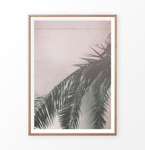 Palm on the pink wall. Retro tropical photograph