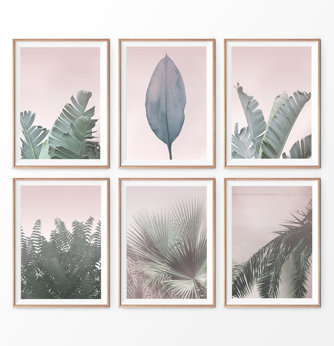 Pink leaves prints, 6 piece wall decor. Banana Leaf, Palm Tree