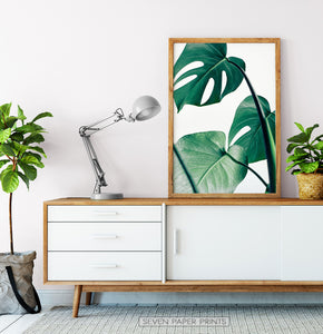 Monstera Leaves in Frame under Cabinet