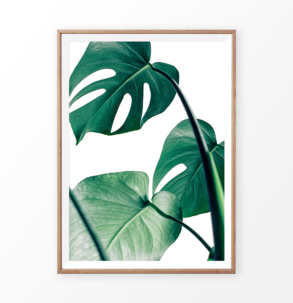 Green Monstera Plant Leaf Print