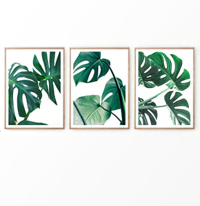 monstera deliciosa wall art set of 3. Palm Leaves Decor