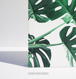 Monstera Leaves. Set of 3 Canvas Prints