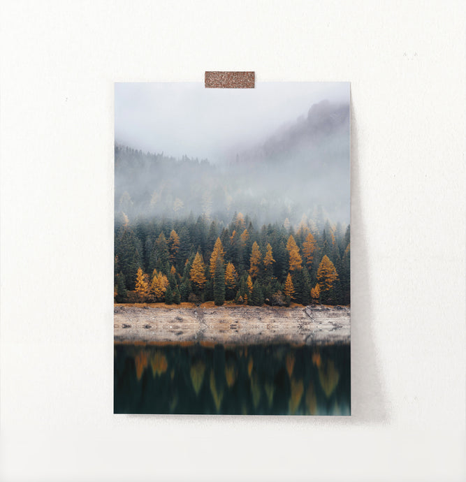 Autumn Coniferous Forest Reflecting In Lake Photo Poster