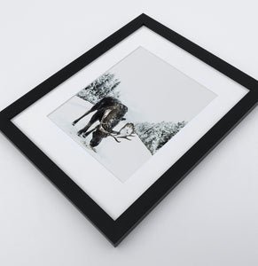 A photo print with a winter moose