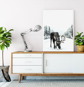 White-framed Moose On a Snowy Country Road Photo Wall Decor